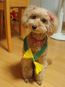 「アカナ」は19種類!選び方と1ヶ月の価格~小型犬のおすすめ~