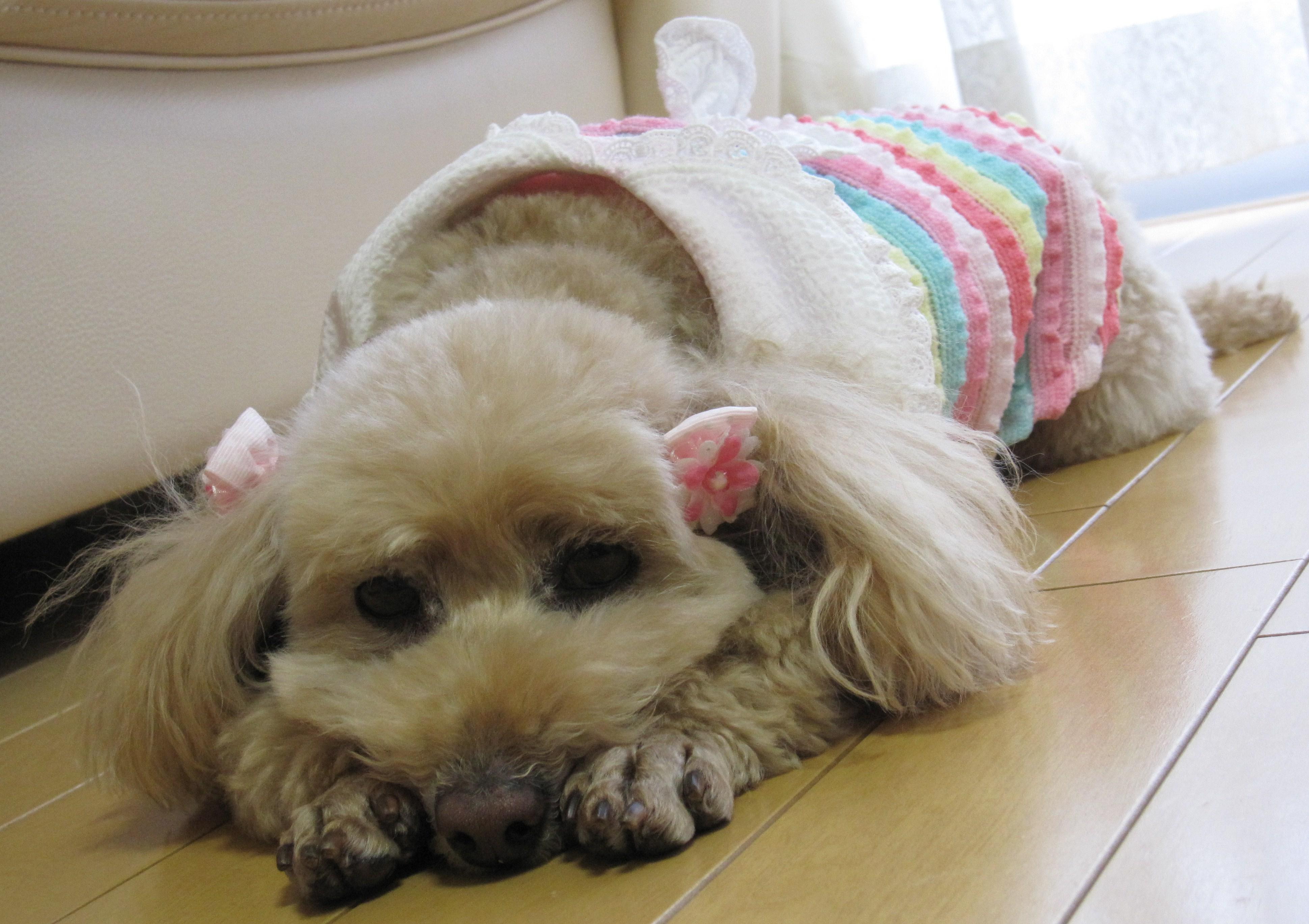 犬の関節サプリ3選、 効果、口コミ、副作用、安く買う方法は?