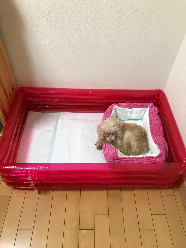 老犬介護用ビニールプール
