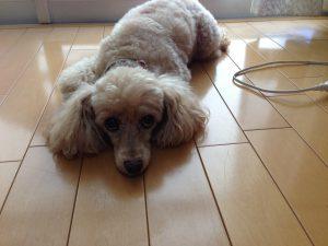 犬はな夏暑さ対策床