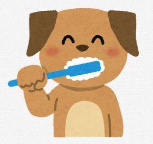 犬のおすすめ歯磨き粉と小型犬の歯ブラシ