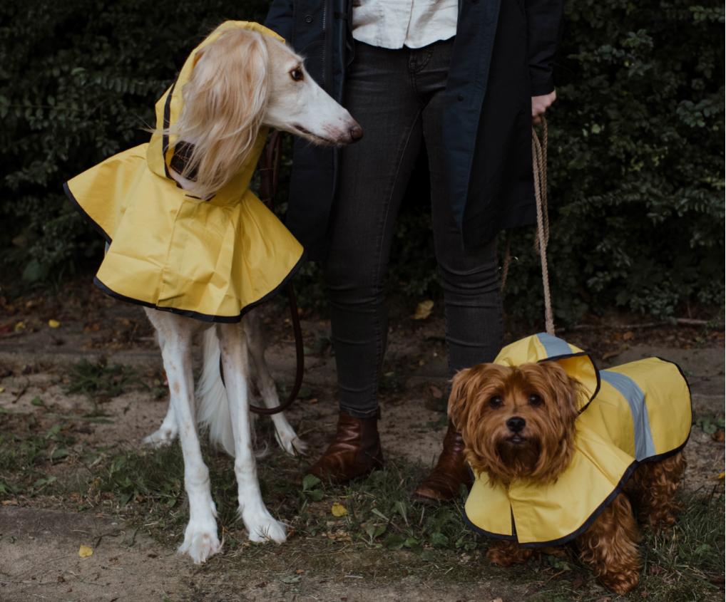 犬レインコート